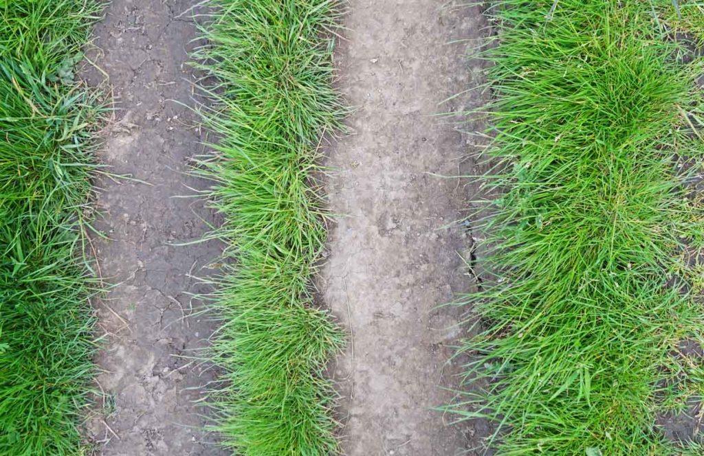 Path near Porth Colmon Wales 2019